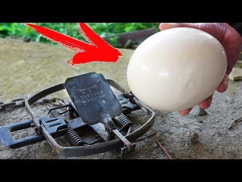 Выдержит ли страусиное яйцо …
