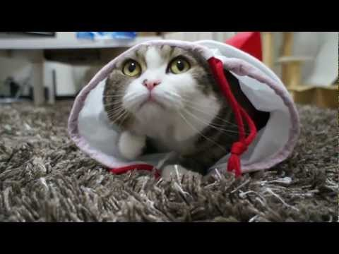 Очень смешной кот)))