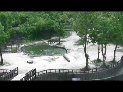 Два слона спасли детеныша, р…