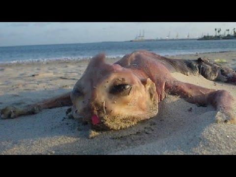 12 морских монстров, выброше…