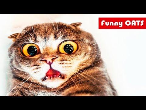 Смешные животные / Приколы с…