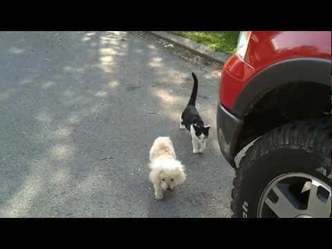 Кошка помогает ослепшему дру…