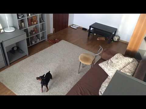 Девушка оставила собаку одну…