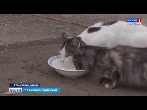 В Ставропольском крае на месте развалин колхозного комплекса появилась современная молочная ферма