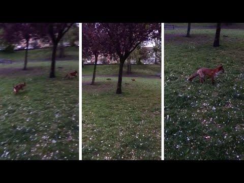 Собака порезвилась в парке в…
