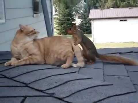 Необычная парочка — кот и бе…