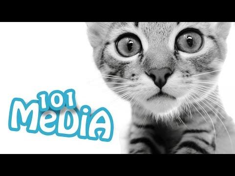 смешные моменты из жизни кот…