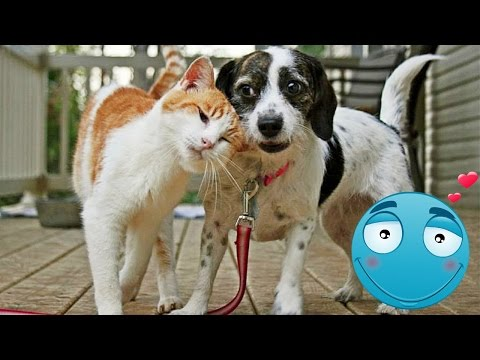 Удивительная дружба котов и …