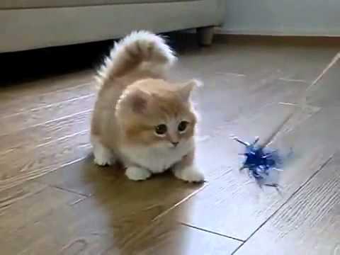 10 самых лучших «кошачих» видео