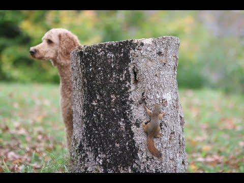 Бельчонок издевается над собакой