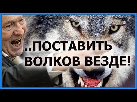 """🔴Жириновский ЛДПР 08.12.2017: """"ПОСТАВИТЬ ВОЛКОВ ВЕЗДЕ!"""""""