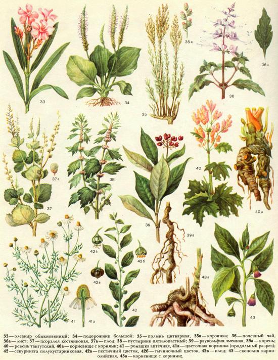 Лечение луговыми травами