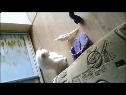 Кот играет с попугаем