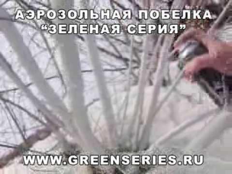 Побелка деревьев ранней весной