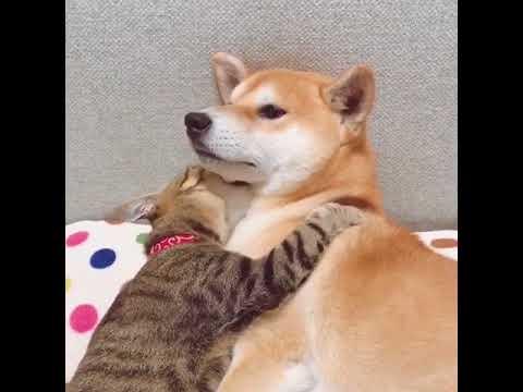 Кошка обнимается с собакой