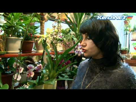 Выбираем комнатные цветы