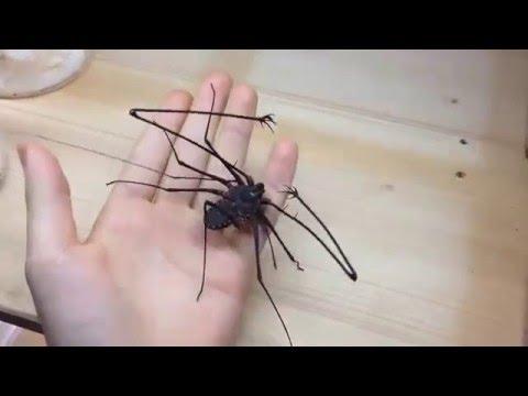 ВИДЕО: Не мышонок, не лягушк…