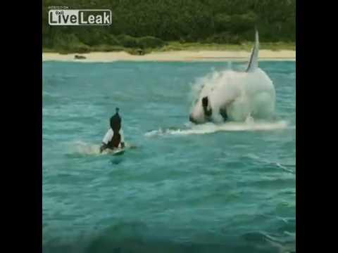Не купайтесь там где акулы водятся.