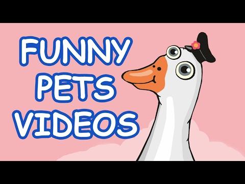 Видео приколы  - животные