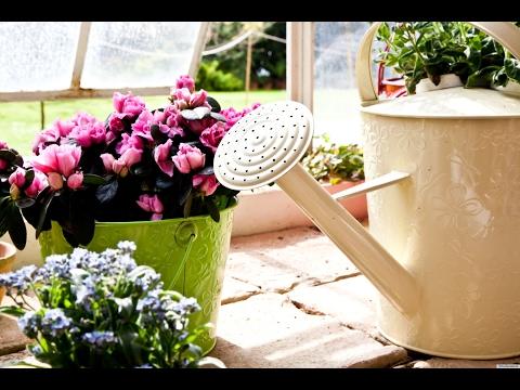 Супер-полезное удобрение для комнатных растений