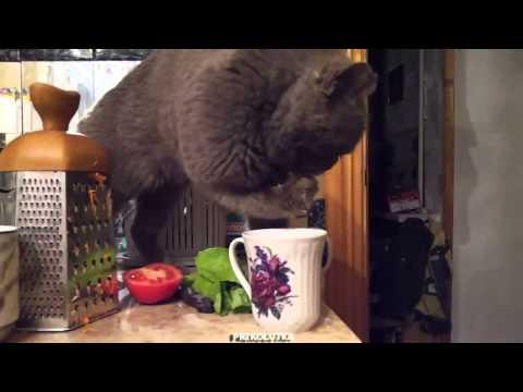 Находчивый кот научился пить…