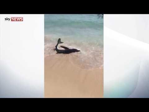 Распугавшая туристов на пляж…