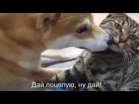 Видео с забавными животными …