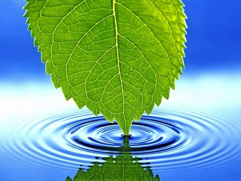 Приготовим живую воду для ве…
