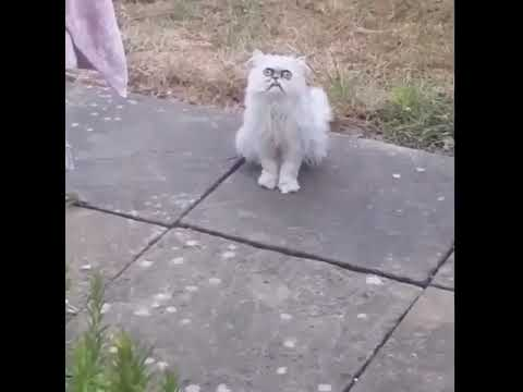 A crazy looking cat at his m…