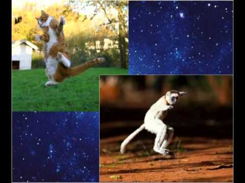 Танцуют все!..