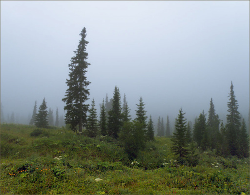 Сказка, рассказанная туманом