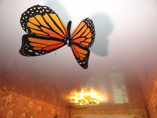 Бабочки на потолке - 8