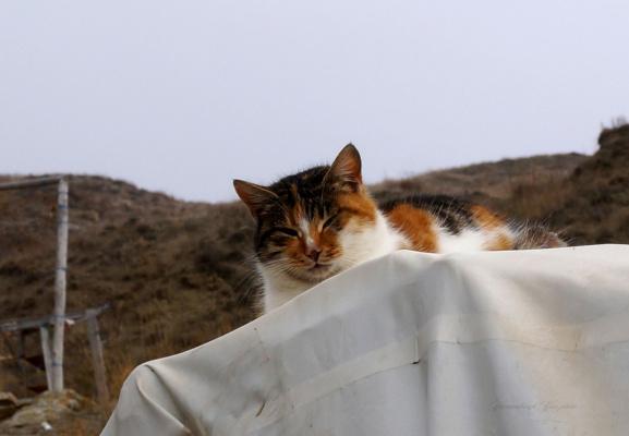 тише,мыши-кот на крыше!