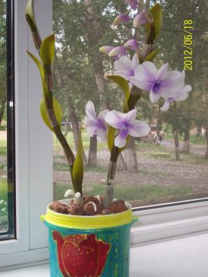 Орхидея Дендробиум  холодный фарфор