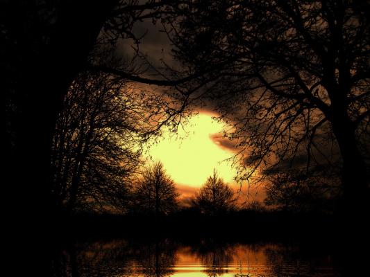 Сказки леса......