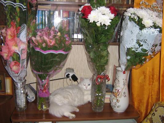 Кошка Ася - любительница цветов!