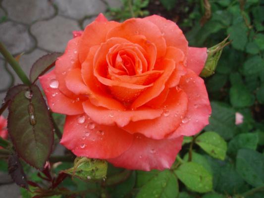 я-садовник )))
