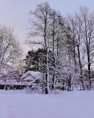 Снежная зима ....