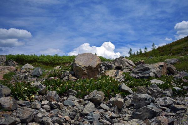 Зона альпийских лугов