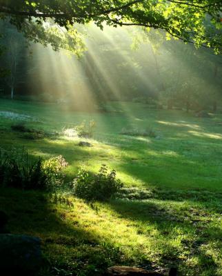 Трава.свет опять