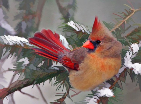 птичка-невеличка....