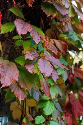 Осенние раскраски 2