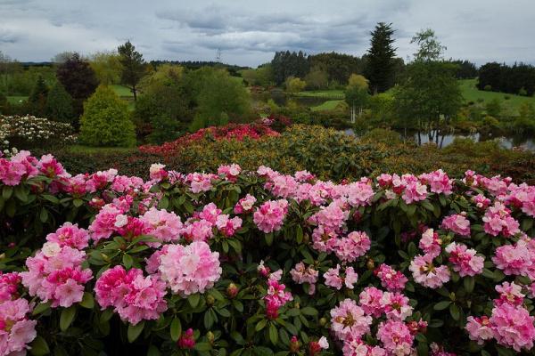 Сад Maple Glen в Новой Зеландии - 4