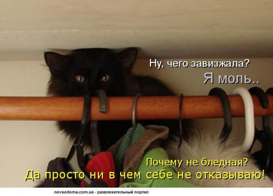 -Я моль чесслово;)