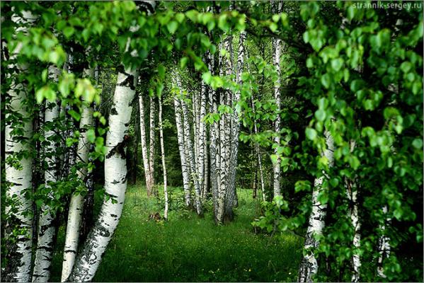 http://strannik-sergey.ru/photo.php?photo=2011/2/2011-05-22-Radishevo-Povarovo/photos/1000/2011-05-22-32.jpg&sc=FFFFFF