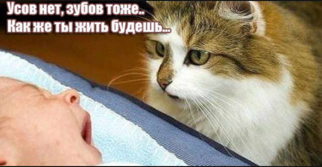 siava.ru_Снимок 1