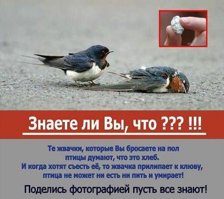 Берегите птиц, люди !!!