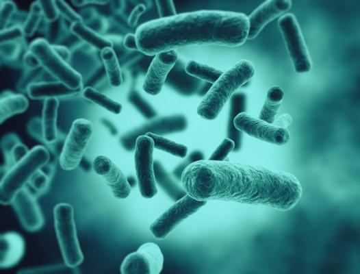 Какие животные защищают себя своими же антибиотиками?