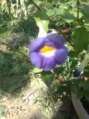 не знаю, что за цветок?