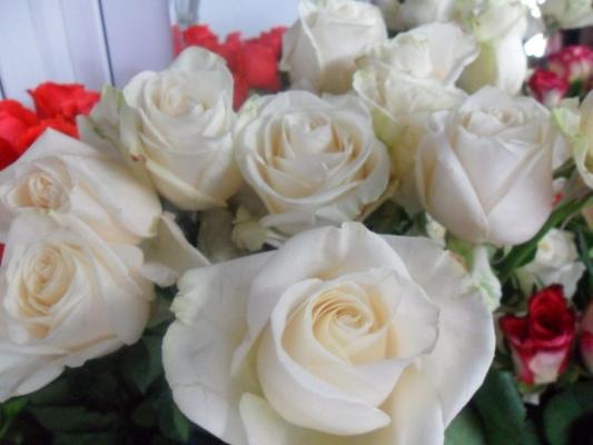 Белые розы.